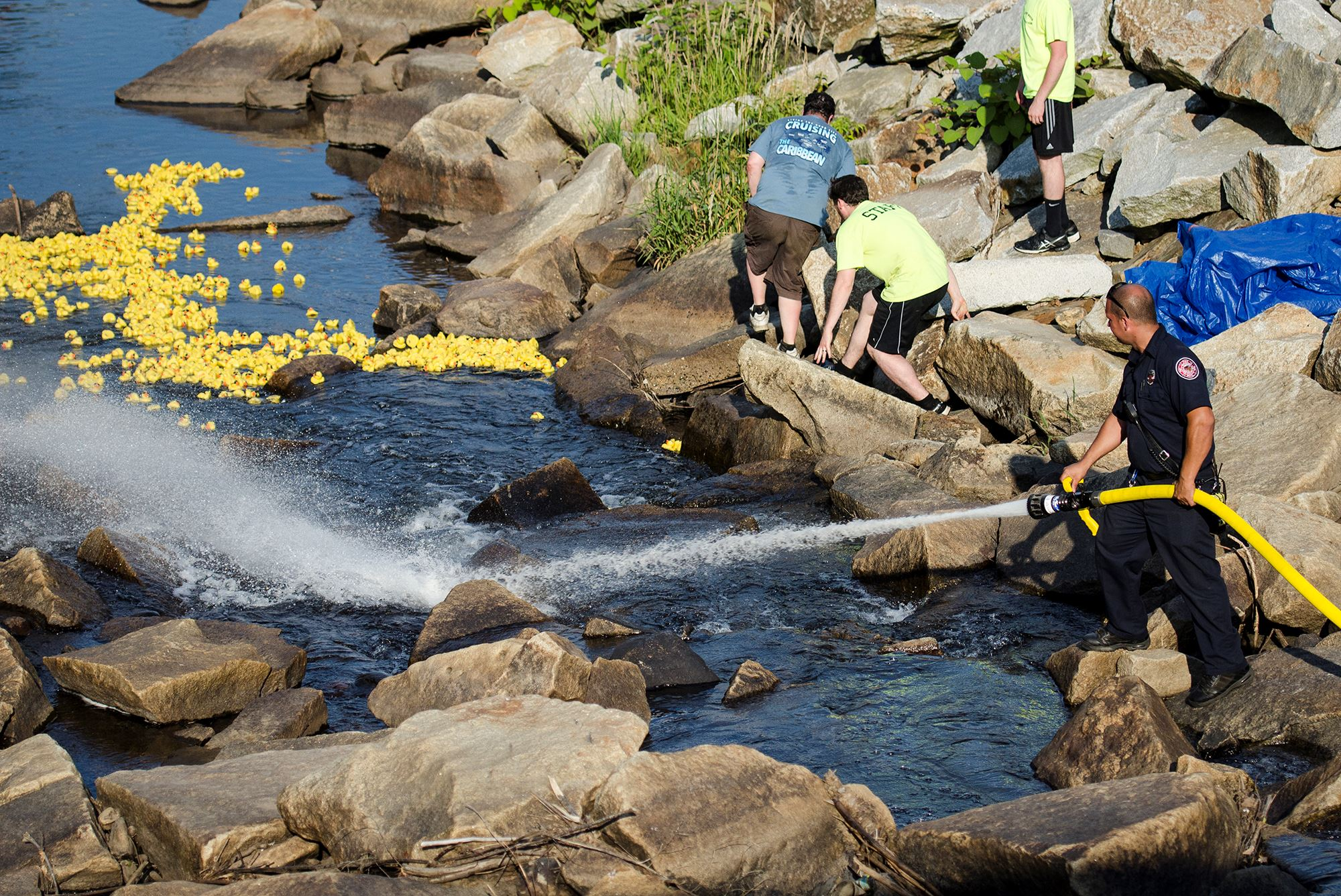 Duck Race And They Are Off